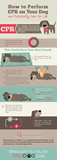 [INFOGRAPHIC] How to Perform CPR on Your Dog https://trudog.com/home/how-to-perform-cpr-on-your-dog-infographic?utm_source=Pinterest&utm_medium=Organic&utm_campaign=Dog%20CPR%20Infographic