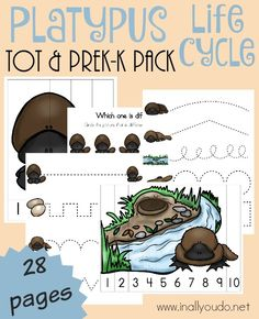 The platypus is such a fun and fascinating mammal and now your little ones can have fun learning all about it with this Tot & PreK-K Pack!! {28 total pages} :: www.inallyoudo.net