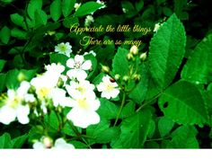 Beautiful pictures by Craftalizing on Etsy