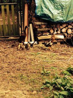 Little duckies in my garden :) Outdoor Furniture, Outdoor Decor, Firewood, Park, Garden, Home Decor, Homemade Home Decor, Garten, Parks