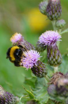 Bull Island, Dublin Photo by Joanna Travers Flower Dance, Creatures 3, Dublin City, Busy Bee, Bees Knees, Animal Pics, Global Warming, Lawn And Garden, Bugs