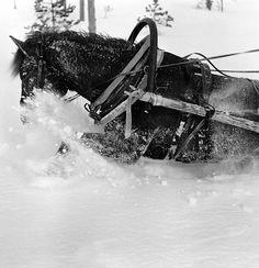 Casa-X: Sotiemme Suomenhevoset History Of Finland, George Santayana, Night Shadow, My Land, Horse Breeds, Nostalgia, Beautiful Pictures, Survival, Creatures