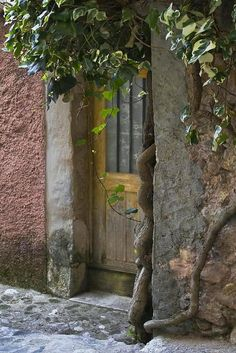 provencetoujours:    Doorway  Ivy, Provence