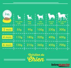 #Astuce : choisir la bonne quantité de nourriture pour votre chien.