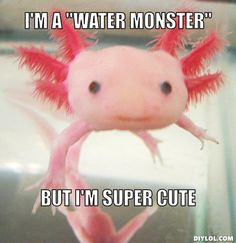 axolotl-meme-generator-i-m-a-water-monster-but-i-m-super-cute-6e4a65