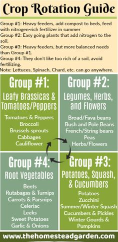 This Crop Rotation Guide will help you have a healthy and successful gardening year Different plants require different nutrients in the soil and they also deplete the soi. Backyard Vegetable Gardens, Veg Garden, Garden Soil, Garden Plants, Garden Landscaping, Garden Bed, Landscaping Ideas, House Plants, Rotation Des Cultures