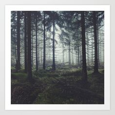 'Through The Trees' Tapestry by Tordis Kayma - Photography, Landscape photography, Photography tips Landscape Photography Tips, Forest Photography, Photography Tricks, Photography Studios, Digital Photography, Aerial Photography, Scenic Photography, Photography Lighting, Photography Backdrops