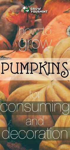 Growing Vegetables How to grow pumpkins for both consuming and decoration purposes! Who misses halloween already? Organic Vegetables, Growing Vegetables, Fruits And Veggies, Slugs In Garden, Garden Pests, Fruit Garden, Garden Tools, Organic Gardening, Gardening Tips