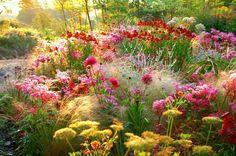 85 Stunning Small Cottage Garden Ideas for Backyard Landscaping - Backyard Garden Inspiration Plants, Garden Plants, Meadow Garden, Irish Garden, Prairie Garden, Small Cottage Garden Ideas, Natural Garden, Garden Design, Cottage Garden