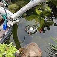 Hometalk :: Put a Glow Stick inside of a bottle...Turn it upside down and put it in a pond as a POND LITE!