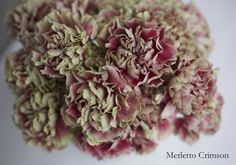 Merletto Crimson Carnation, part of the Antique Collection available from Florabundance Wholesale.