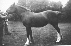 Cymraes	   breed 	Welsh Pony & Cob color 	Chestnut sex 	female	 date of birth 	  1929