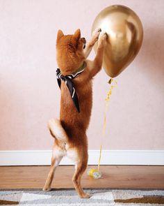 Drawstring Backpack Shiba Inu Dogs Doggies Bones Gym Bag