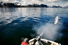 Røst, Lofoten, Norway A harpoon is fired from the Nordfangst during a whale hunt.
