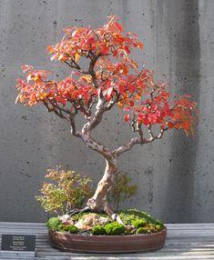 American Bonsai at the NC Arboretum - Page 2