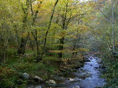 Río Muniellos, en 'El Parque Natural de las Fuentes Narcea', Asturias, ES