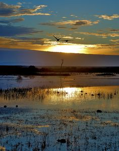 Bosque del Apache National Wildlife Refuge, New Mexico | Mike Menefee Photography