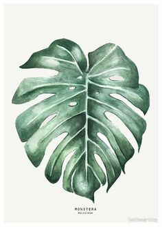 Print – Best Garden Plants And Planting Watercolor Plants, Watercolor Leaves, Watercolor Paintings, Watercolour, Jungle Drawing, Jungle Art, Monstera Deliciosa, Faux Philodendron, Leaf Drawing