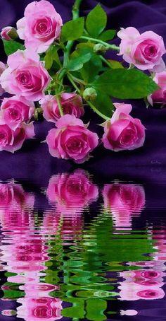 Beautiful Love, Beautiful Flowers, Hanuman Ji Wallpapers, Power Wallpaper, Universe Art, Flower Quotes, Flower Market, Happy Mothers Day, Flower Power