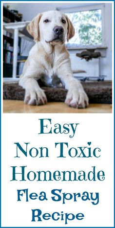 How to make homemade flea spray for house with essential oils so you can avoid exposing your dog and your family to potentially toxic chemicals. Natural Flea Remedies, Dog Flea Remedies, Home Remedies For Fleas, Flea Remedy For Dogs, Natural Cures, Flea Spray For House, Flea In House, Flea Spray For Cats, Fleas On Puppies