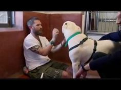 Tom Hardy Playing with Dogs at a Dog Rescue - YouTube