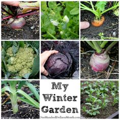 Here's what I have growing in my winter garden.