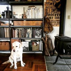 Happy Dog  ジュニア  ラブラドール犬のことを、うちではラブラブドール犬と呼んでいる  #truckfurniture  #trucknest