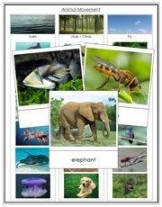 FREE Download: Animal Movement - Swim, Walk, Fly.  Sorting cards and a Control Chart for 16 animals.