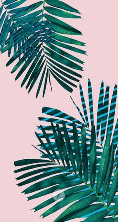 Trendy Plants Wallpaper Iphone Drawing Ideas - Weddings - Purple, Plum and Eggplant - Teenager Wallpaper, Teen Wallpaper, Plant Wallpaper, Cute Wallpaper For Phone, Pink Wallpaper Iphone, Tumblr Wallpaper, Aesthetic Iphone Wallpaper, Cute Backgrounds For Phones, Backgrounds Wallpapers