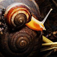 Snails by Suren Manvelyan