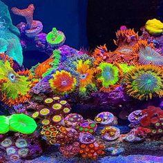 Coral Reef Aquarium, Saltwater Aquarium Fish, Saltwater Tank, Beautiful Sea Creatures, Animals Beautiful, Nano Cube, Fish Tank Design, Marine Tank, Nano Tank