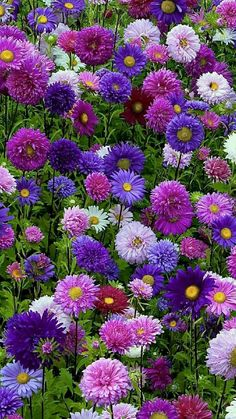 Latest No Cost Purple Flowers nature Concepts Purple flowers are one of the most impressive and also versatile blooms for any garden. Exotic Flowers, Amazing Flowers, Diy Flowers, Colorful Flowers, Beautiful Flowers, Spring Flowers, Flowers Decoration, Pink And Purple Flowers, Flower Ideas
