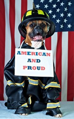 American and Proud Boxer