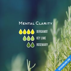 Mental Clarity - Essential Oil Diffuser Blend