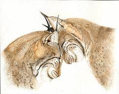 Lynx Pair 8x10 PRINT from original watercolor by Earthspalette