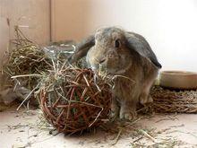 Jeux et jouets pour le lapin de compagnie marguerite et cie lapin pinterest - Jeux pour lapin a fabriquer ...