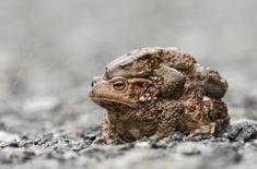 Toad, Twitter, Animals, Animales, Animaux, Animal, Animais