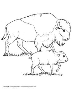 Wild animal coloring page | Bison mother and calf Coloring page