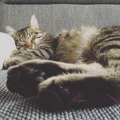 Couch: my favourite sleeping spot.  #luckythecat #love #cute #catsofsalzburg #salzburg #austria #cat #meow #ilovemypet #catlovers #lovekittens #instapet #catsagram #kitten #kitty #catstagram #kittycat #catsofinstagram #ilovemycat #catlove #catoftheday #furry #cats_of_instagram #cats #catlife #katze #katzenliebe #miezekatze #bestmeow