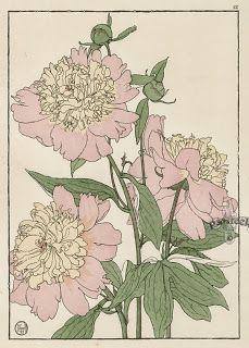 Коллекция картинок: Botanicals. Jeannie Foord