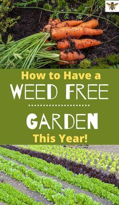 541 Best Gardening Fruits Vegetables Images In 2020 Vegetable