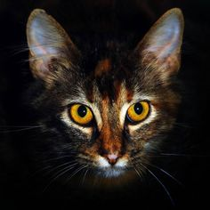 cat eyes - Cats Picture