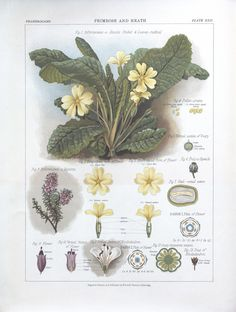 1 - The botanical atlas : - Biodiversity Heritage Library