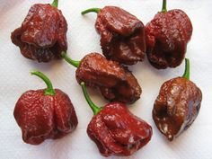 Trinidad 7 pot Douglah Seeds from 2,000,000 Scoville ( Organic Seeds) World's Hottest Pepper