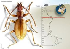New beetle species discovered in world's deepest cave