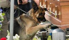 Dog mourns loss of his KY police officer partner