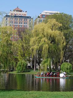 The Boston Public Gardens, located next to the Boston Common, feature the famous Swan Boats.