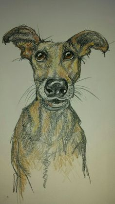 Coloured pencil Doggie by Lindsay Norman