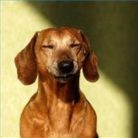 treatments-dogs-constipation