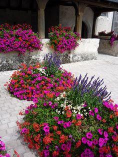 Front House Landscaping, Landscaping Plants, Flower Containers, House Landscape, House Front, Container Gardening, Beautiful Flowers, Garden Design, Garden Ideas